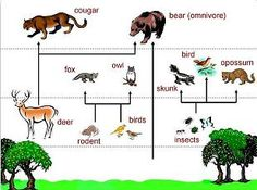 Image Of Food Chain Of Forest Ecosystem , 7 Diagrams Of Rainforest Animals Food Chain In Animal Category Rainforest Food Chain, Rainforest Animals, Food Chain Diagram, Temperate Deciduous Forest, Forest Ecosystem, Forest And Wildlife, Kindergarten Science, Biomes, Recipe Images