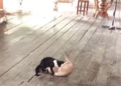 Two Dogs Breaking Up A Cat Fight