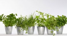 Mon mini jardin de plantes aromatiques -By Prima Grands Pots, Hacks Diy, Terrarium, Planter Pots, Site Officiel, Top 5, Affirmation, Recherche Google, Conservation