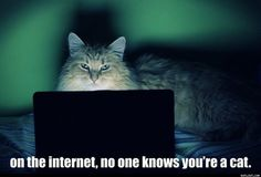 Judith Foster uploaded this image to 'LOL cats'.  See the album on Photobucket.