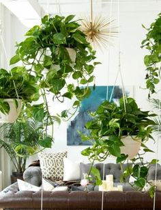 Try a living plant wall, like the one currently in Homepolish's New York headquarters.