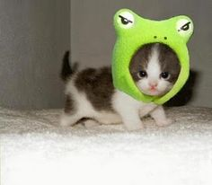 BABE IT'S A GORDO! LOL Part Cat...Part Frog...Hmmmmm