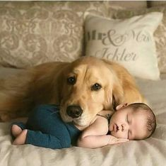 Funny And Cute Golden Retriever Puppies Compilation - Cute Puppies Videos Dogs And Kids, Animals For Kids, Cute Baby Animals, I Love Dogs, Animals And Pets, Babies With Dogs, Nature Animals, So Cute Baby, Cute Kids