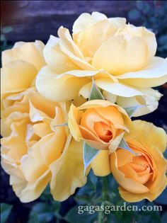 Wait until after the very last frost  for pruning roses. Roses are delicate, be patient.