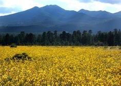 San Francisco Peaks near Flagstaff, AZ