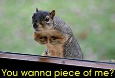 Funny Squirrel Pictures Animal | ... Funny Squirrel Pictures With Captions - Images - Funny Wild Animals