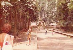 Monkey Forest 1982