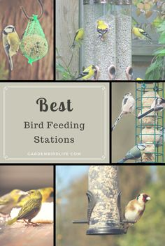 Top Quality Bird Seed - For Your Special Discount see: http://gardenbirdlife.com/
