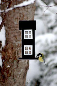 Autuas olo: Lintujen ongelmia