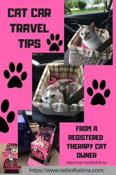 Cat Car Travel Tips from a registered animal therapy owner. Traveling in the car with your cat can be a smooth ride with a little planning and preparation. Read how to have a pleasant car ride with your cat.#cats #catlovers #cutecats #cattherapy #animalovers #pets #feline #calico #calicocats #cattravel #catcartravel