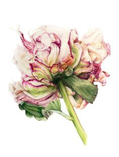 """Saatchi Art Artist Marie Burke; Painting, """"Peony"""" #art"""