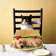 Приятного аппетита рецепты тортов