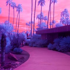 "Palm Springs and Joshua Tree aren't short of standard depictions, which is why Melbourne-based photographer Kate Ballis's infrared images of the desert town and national park are so striking. Pools become blood orange, country clubs go neon and trees take on an intense lilac glow. Iconic homes and the dreamlike landscapes of Palm Springs and its surroundings feel fresh all over again. Through her vibrant photos, Ballis wanted to show ""the gems below the surface"" or ""the riches that lie ju..."