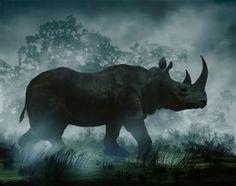 Happy World Rhino Day! Image by Didier Massard.
