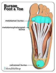 Plantar and foot anatomy - bursae can become inflamed with bursitis