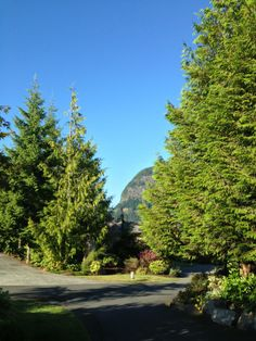 """See 15 photos and 5 tips from 41 visitors to Sonora Resort, Vancover ,BC. """"The food is amazing ! British Columbia, Bucket, Country Roads, Buckets, Aquarius"""