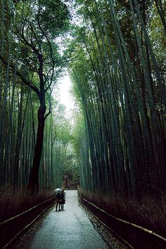 Sagano bamboo forest (Arashiyama, Japan)