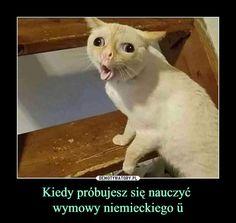Funny Mems, Life Humor, Bjd Dolls, Best Memes, Popular Memes, Tennessee, Funny Animals, Real Life, Haha