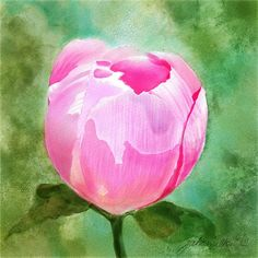 """""""Pink Peony Bud/Gramma's Glow"""" - Digital Watercolours, in Floral Gallery Watercolor And Ink, Watercolor Flowers, Watercolor Paintings, Watercolor Ideas, Flower Paintings, Pink Peonies, Pink Flowers, Peony, Fruit Painting"""