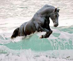 Pony marino de cobalto!