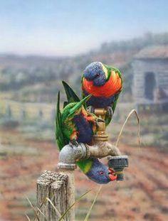 Greg Postle, Drip from Kingfisher Art And Framing - Buy Online Australian Animals, Australian Artists, Australian Bush, Funny Birds, Colorful Birds, Colorful Parrots, Wildlife Art, Bird Art, Bird Feathers