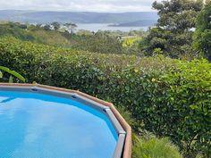 Forest Habitat, Adventure Activities, Tropical Garden, Costa Rica, Habitats, Lush, Cottage, Vacation, Outdoor Decor