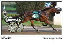 Maven - millionaire four-year-old mare trotted a stunning 1:51.4 world record in the Miss Versatility Final at Delaware, Ohio, she headlines the Breeders Crown Open Mare Trot on Saturday, October 19th at Pocono Downs