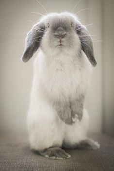 Content rabbit #rabbitcare Funny Bunnies, Baby Bunnies, Cute Bunny, Zoo Animals, Animals And Pets, Funny Animals, Cute Animals, Rabbit Life, Rabbit Baby