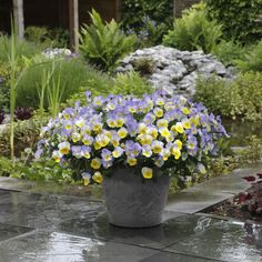 10 Best Plants for Container Gardening These gorgeous plants shine all season long in containers.