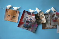Bird Clip | postcard clips | white  #thezoo #zoo #capventure #dutchdesign #product #JorineOosterhoff #postcardclip #birdclip