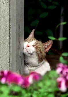 I think I'm a cat. :D