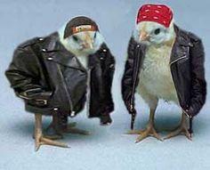 Biker Chicks~♛