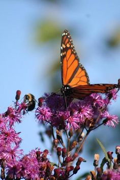 Why native plants are a moral choice.