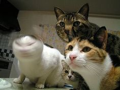 Blurry cat!