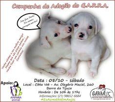 BONDE DA BARDOT: RJ: RJ: Sábado o G.A.R.R.A. realiza campanha de adoção na Barra da Tijuca (08/10)