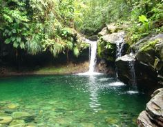 Cascade Paradise à La Guadeloupe Guadalupe Caribbean, Places To Travel, Places To See, French West Indies, Caribbean Art, Les Cascades, Island Life, Trees To Plant, Deco