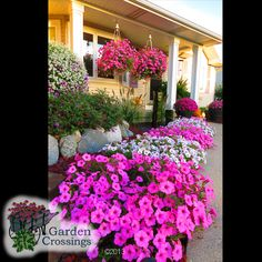 Proven Winners Plants ( Annuals Perennials & Shrubs) looking great in Michigan at the end of September