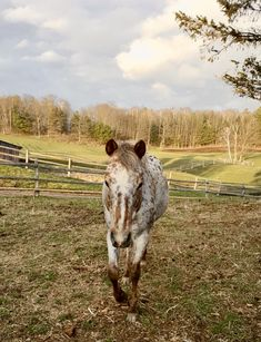 Quality horseback riding and ranch experiences. Riding lessons, cabins on the lake, rodeos, horseback vacations and trail riding for all levels. Trail Riding, Horse Riding, Lakeside Cabin, Riding Lessons, Winter Cabin, Appaloosa Horses, Lake Cabins, Ranch Life, Valentine Special