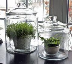 What a wonderful idea for a terrarium!  Excellent idea for ferns.
