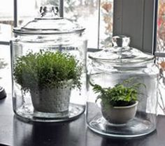 What a wonderful idea for a terrarium!  Excellent idea for ferns.