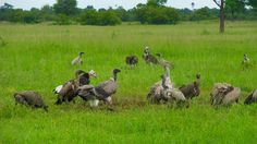 Tanzania, Safari, National Parks, Campaign, Rain, Birds, Content, Medium, Rain Fall