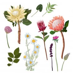 Protea and others flowers Premium Vector foliage, flower, floral, summer, tropic. Protea and other