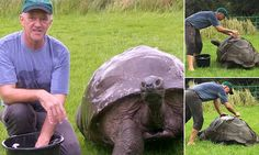 The world's oldest tortoise, Jonathan, enjoys his first-ever bath #DailyMail   These are some of the stories. See the rest @ http://twodaysnewstand.weebly.com/mail-onlinecom or Video's @ http://www.dailymail.co.uk/video/index.html