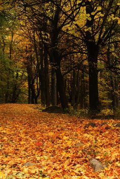 Vitosha mountain at fall