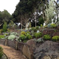 Dazzling cheap sectionals in Landscape Modern with Rock Garden next to Simple Backyard Landscape alongside Cheap Backyard Landscaping and Residential Steep Slope Landscaping Sloped Backyard Landscaping, Landscaping On A Hill, Sloped Yard, Landscaping Melbourne, Landscaping With Rocks, Modern Landscaping, Landscaping Ideas, Landscaping With Railroad Ties, Steep Hillside Landscaping
