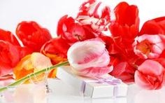 Red Tulips, Tulips Flowers, Roses Only, Red Gifts, Flower Images, Free Pictures, Birthday Gifts, Presents, Wallpaper