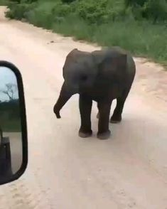 Cute Little Animals, Cute Funny Animals, Tierischer Humor, Save The Elephants, Baby Elephants, Baby Hippo, Elephant Baby, Cute Animal Videos, Cool Pets