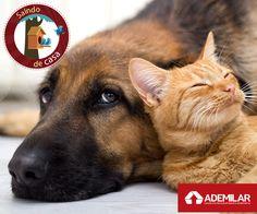 Deixe sua casa mais confortável para seu pet e retribua todo o carinho que ele lhe dá todos os dias.