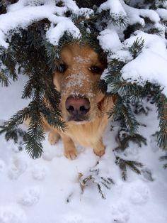 #CanineCuteness !