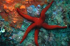 Sea Star Starfish Restaurant, Out Of This World, Ufo, Fun Projects, Octopus, Stars, Retro, Animals, Images